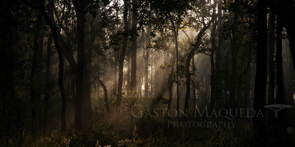 Kippling Forest - Kanha NP  . India